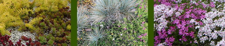 Various types of plants in eco-roof