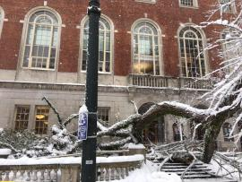 Felled tree at Central Library 1