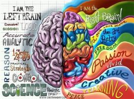 An image of the human brain depicting left and ride side functions. The logical left brain and the creative right brain.