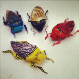suzanne moulton- bottlecap beetles
