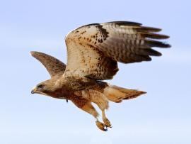 HawkWatch