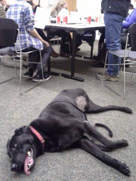 Mack the Labrador with Northwest Library teens