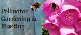 Pollinator Gardening & Planting