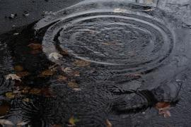 Image of a rain puddle.