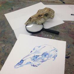 Skulls: Painting and Drawing Animal Anatomy