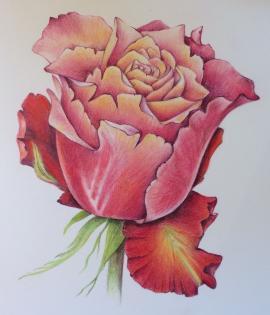 Rose by Dorota