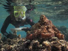 Woman scuba diver and octopus