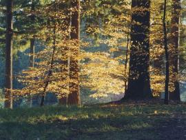 Trees at Hoyt Arboretum