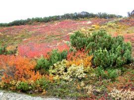 Photo of tundra